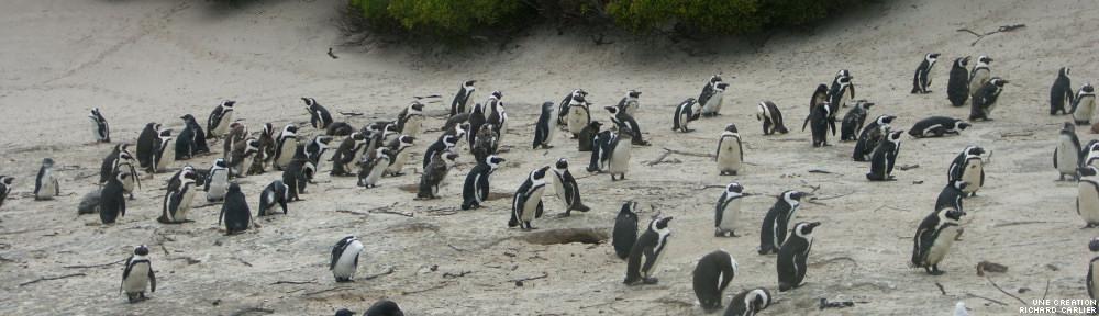 Zone Pingouin